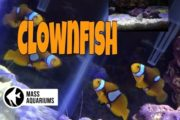 10 gallon reef (Day 2) using Fluval Cycle. Clownfish are healthy,...