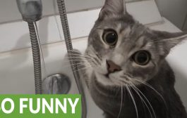 Cat has unusual fascination with running tap water...
