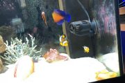 Saltwater aquarium without sump and on tap water!!!...