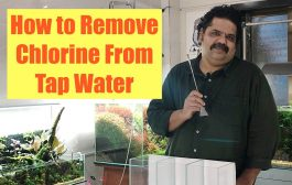 HOW to Test Tap Water for Chlorine   Howto Save Fish from Chlorin...