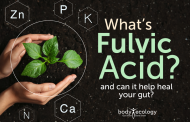 What's fulvic acid, and can it help heal your gut?...