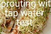 Sprouting seeds in tap water and more (test)...